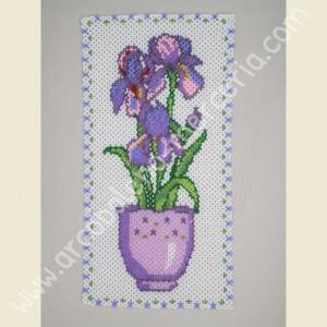 556 Vaso di Iris